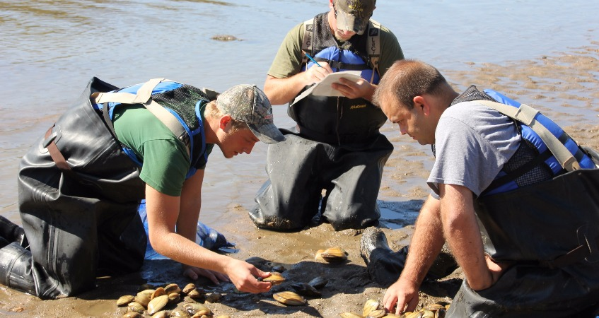 Volunteers Rescue Hundreds of Mussels